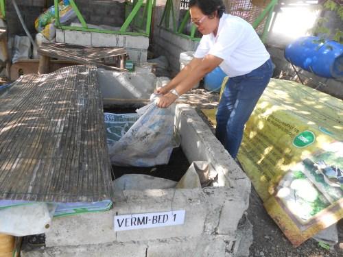 Elizabeth Se, one of the staff, checks the vermicomposting bin.