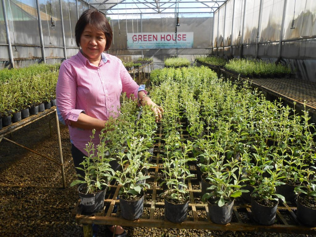 SWEET & FIT: First Commercial Stevia Grower And Processor In PH As Tourist Destination